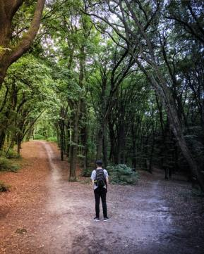 overcoming decision fatigue : man in forest facing two paths