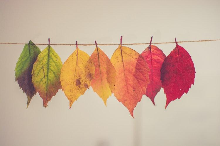 autumn favourites multicoloured leaves