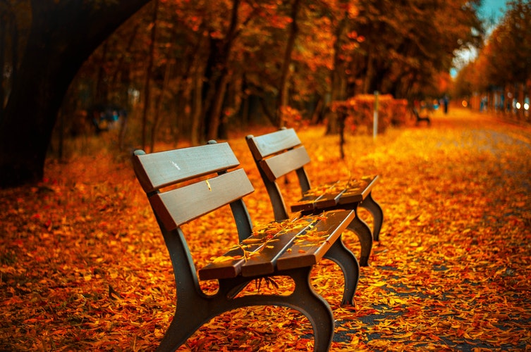 autumn favourites benches autumn leaves
