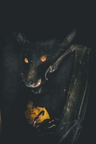 horror stories black bat