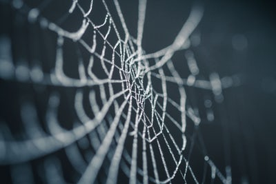 halloween and horror stories spiderweb