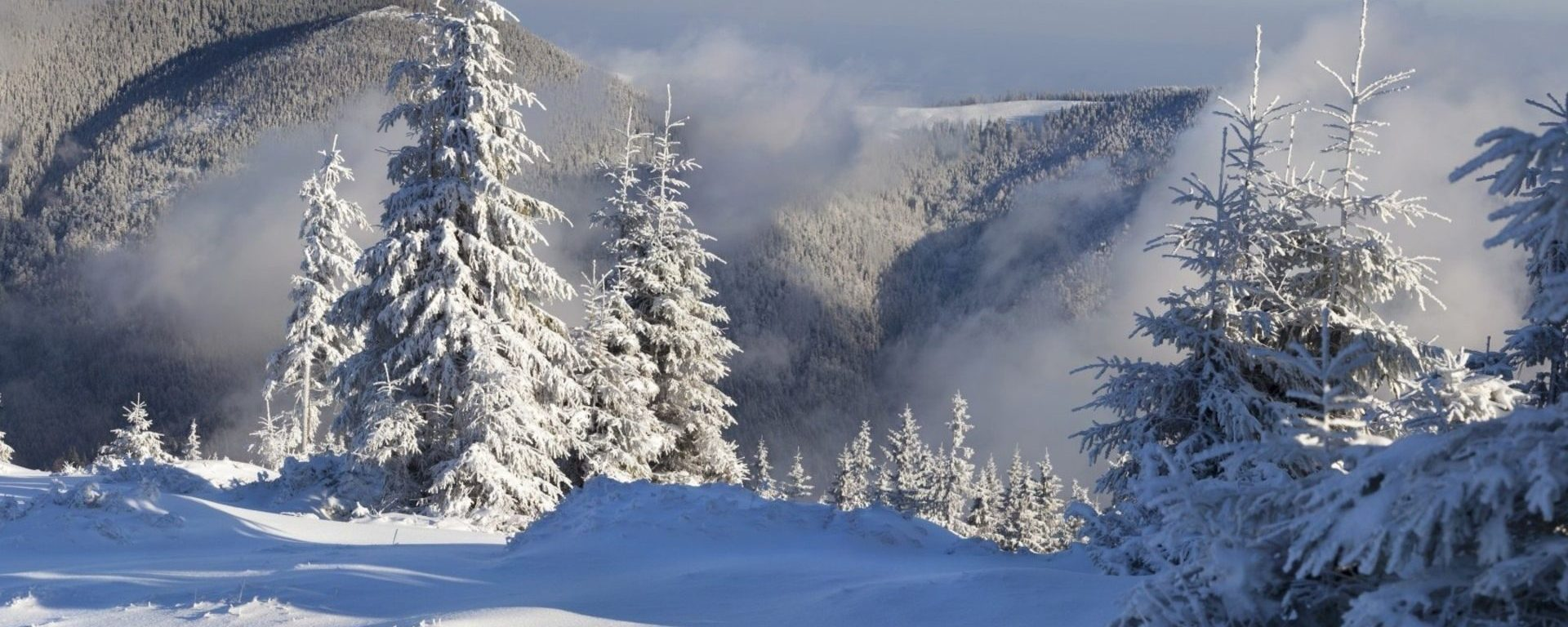 winter wonderland winter landscape