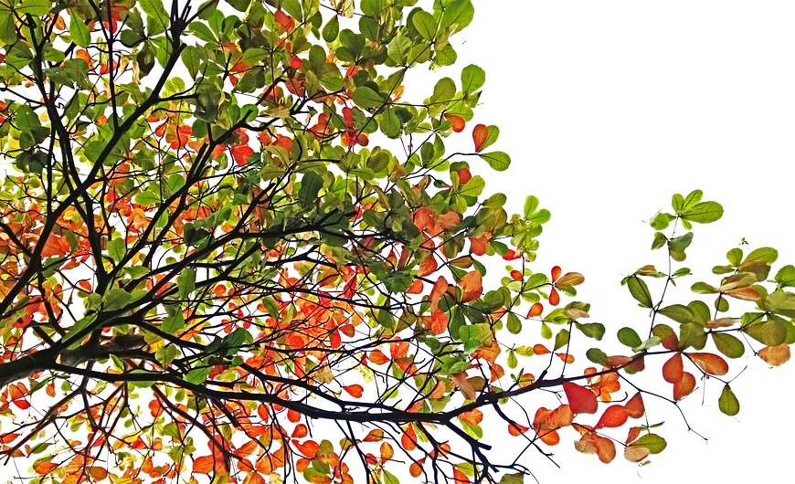 magical branch multicoloured leaves