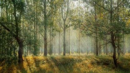 magical forest summer