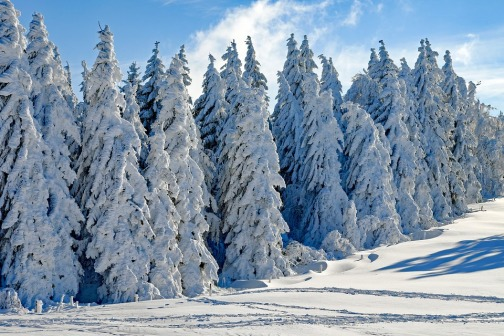magical forest winter