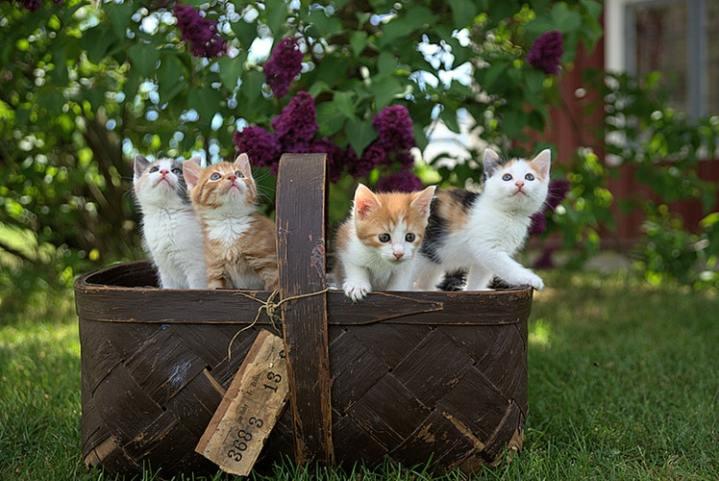 treasure kittens in basket