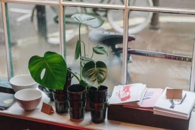 swiss cheese plants balcony