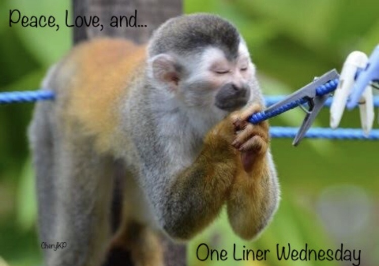 one liner wednesday monkey