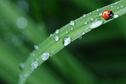 raindrops ladybird
