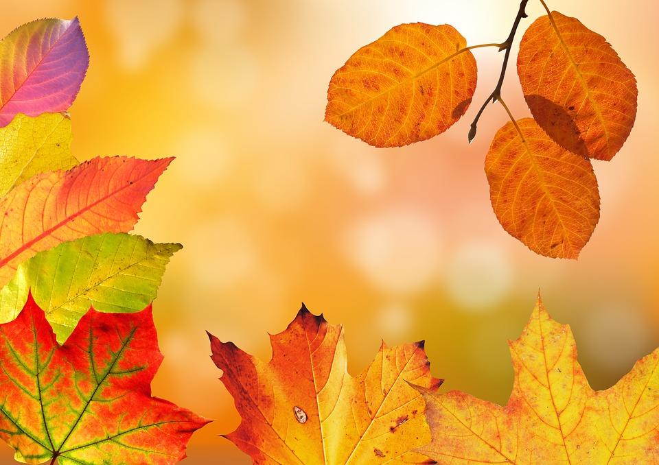 leaves autumn colours