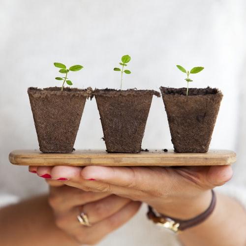 plants three seedlings tray hands
