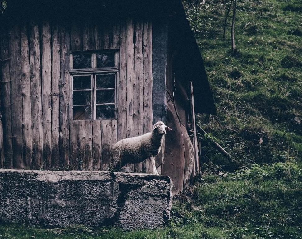 abandoned liittle house