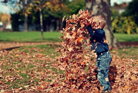 autumn favourites child playing with dry leaves