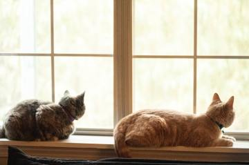 two brown and black cats lying near window