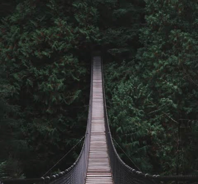 narrow bridge between trees