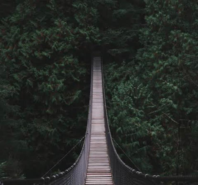 narrow bridge between trees
