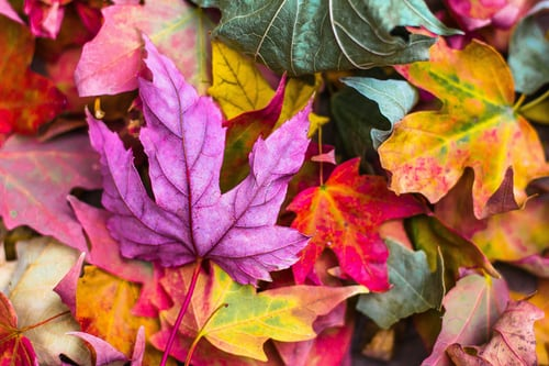 autumn leaves multicoloured