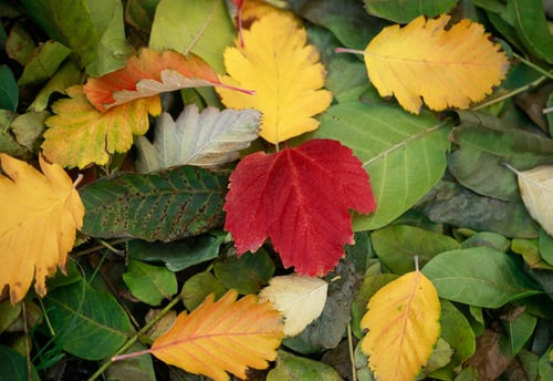 brightly coloured autumn leaves