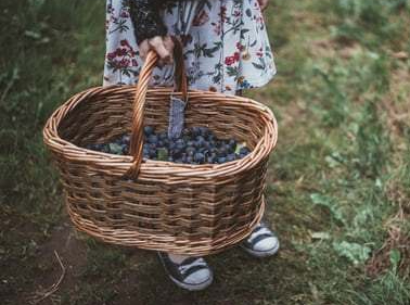 girl with basket of plums