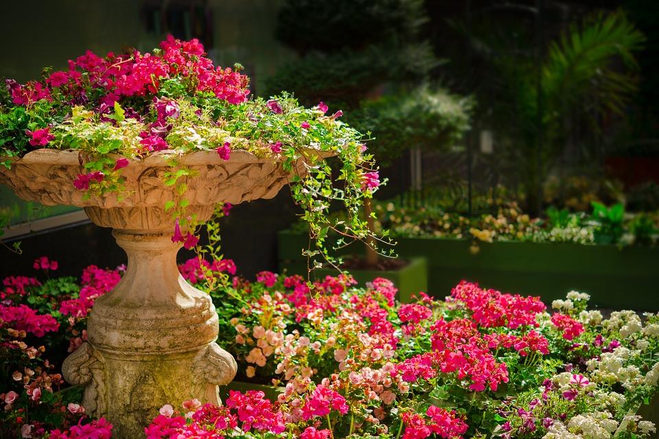 garden flowers planter