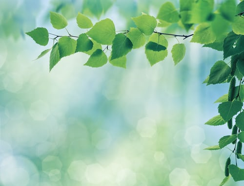 leafy branch background